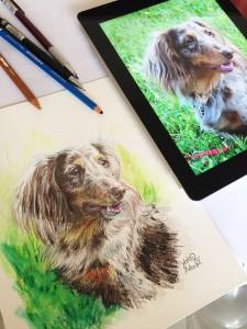 DogIllustration Colors